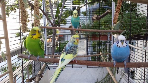 Coco,Toto Leo und Merlin