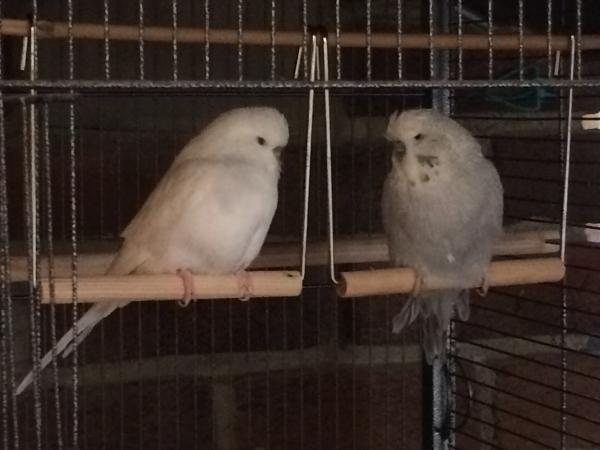 Penelope & Muffin