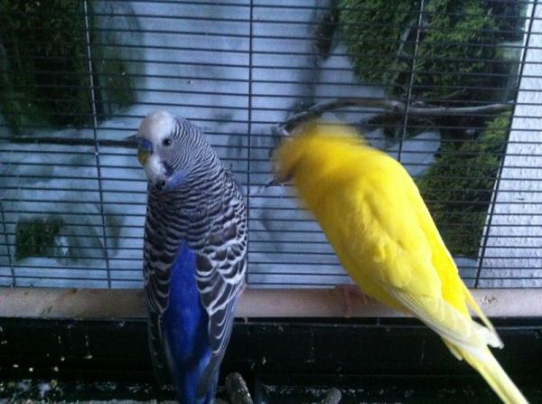 Kalli und Sun Diego