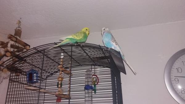 Fipsi & Vanilli