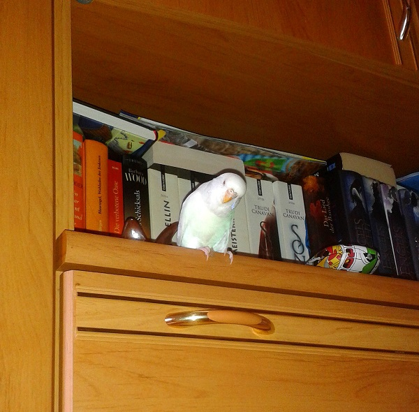 Coco Bücherwurm