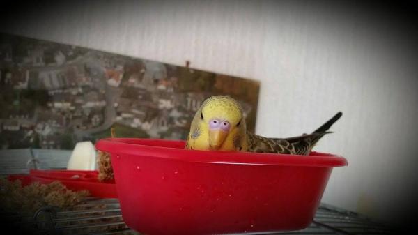 Oscar, die Wasserratte