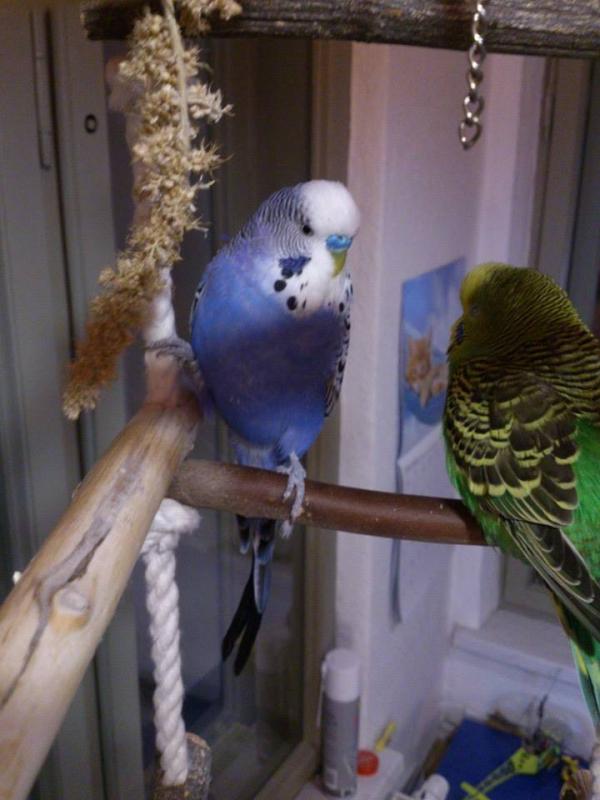 Lui (blau), Lilli (grün)
