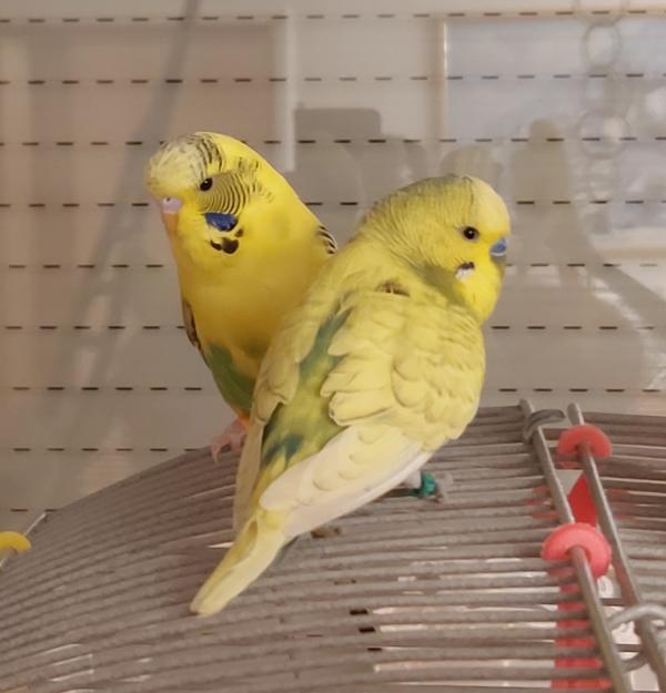 Coco und Einstein erster Freiflug