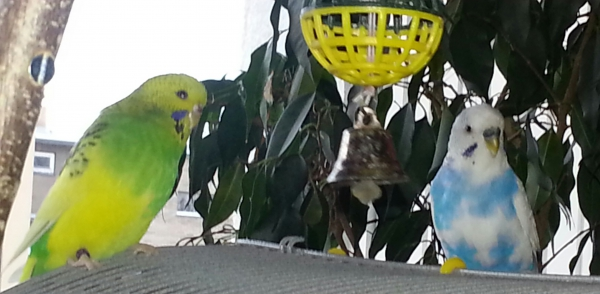 Unser Federbälle