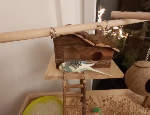 Oh ein neues Haus