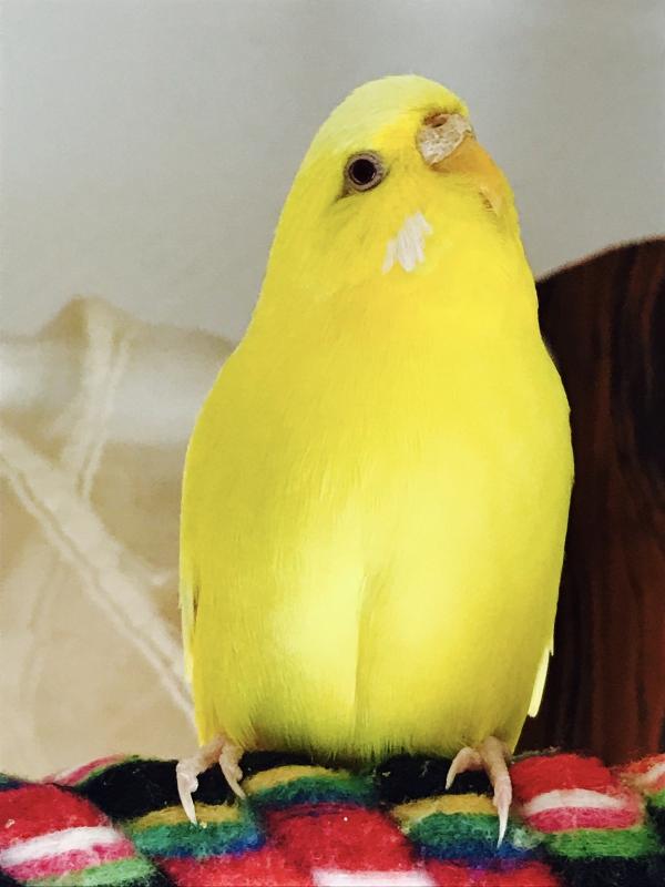Gelb wie eine Zitrone