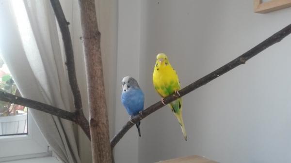 Sammy und Lori