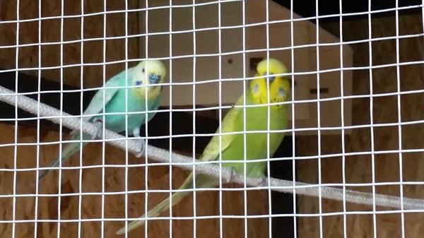 Das sind meine beiden Lockvögel