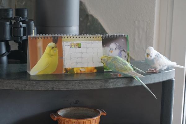 Luna und Justus schauen sich den Kalender an