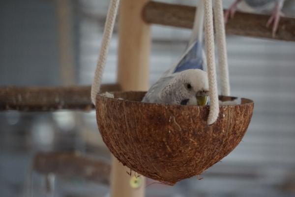 Tala in der Kokosschaukel
