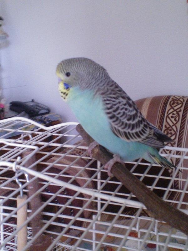 Das ist Rocky