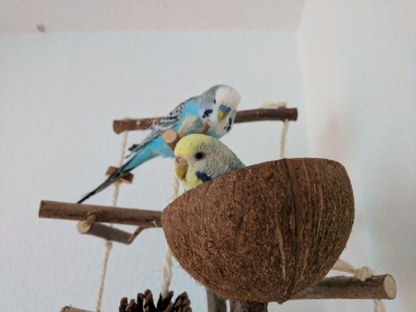 Mia in der Kokosschale