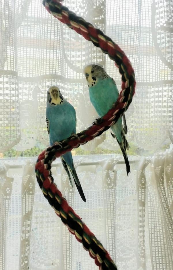 Blue und Leila