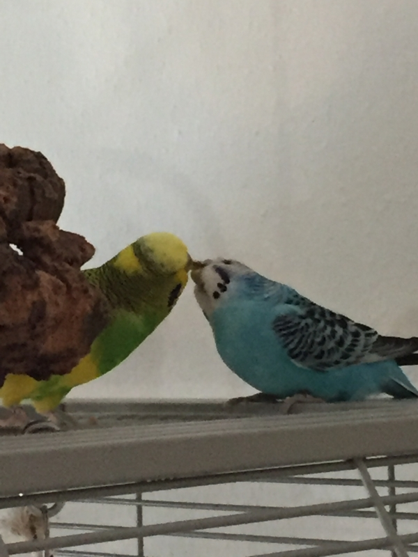 Ertappt! Michi und Henriette beim Knutschen