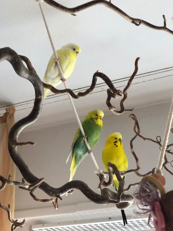 Farblich sortiertes Trio in luftiger Höhe