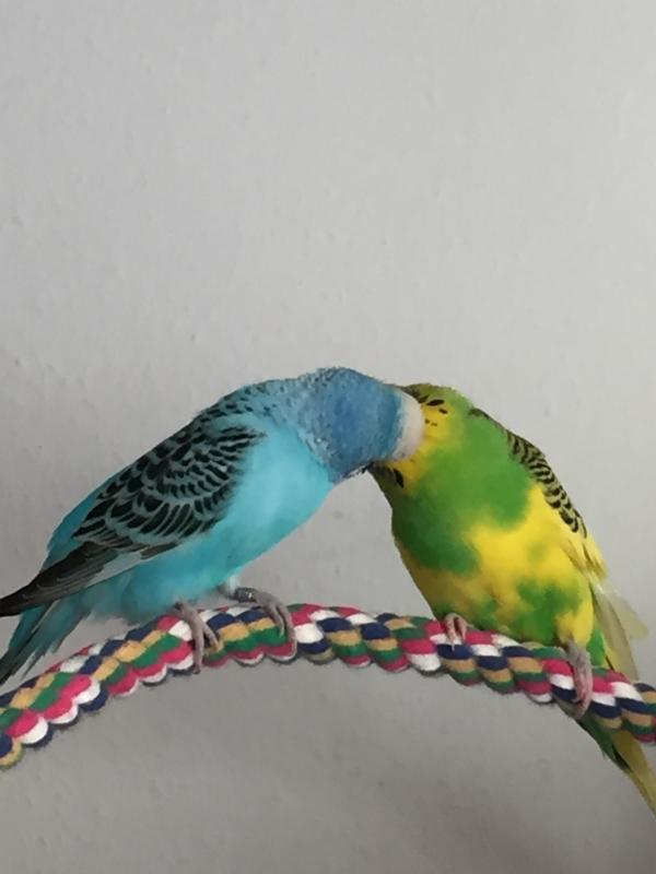 Henriette und Michi ganz verliebt