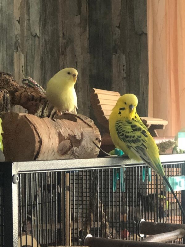 Familie Sonnenschein - Flocke und Sunny