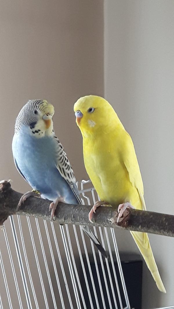 Sammy + Kiki