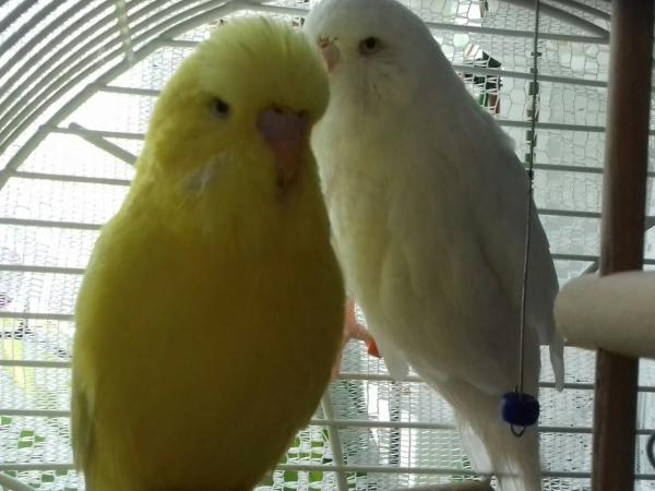 Luna und Sunny