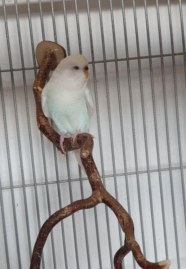 Ein Albino zeigt Farbe