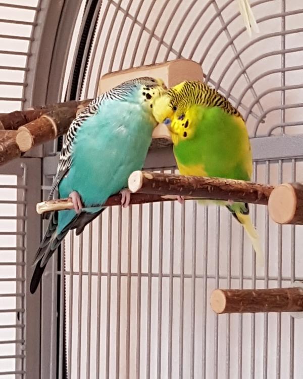 Kira und Elvis kuscheln