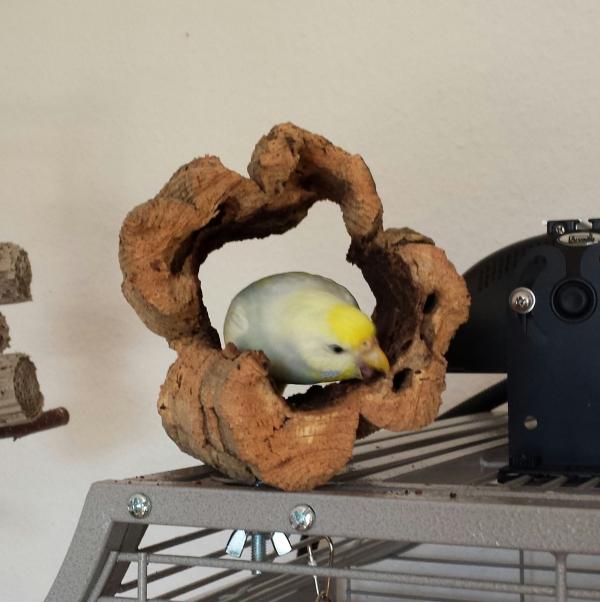 Fiona schreddert