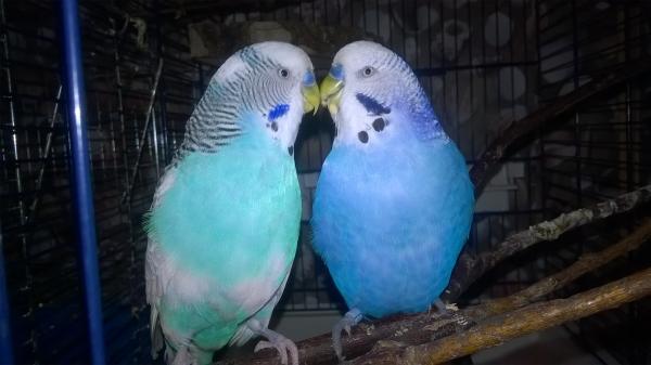 Vio und Timmi