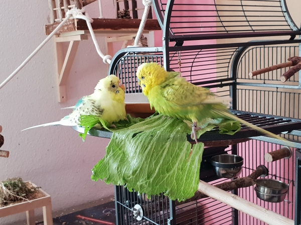 Bert und Leo baden