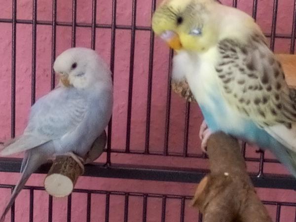 CIndy und Bert beim Putzen
