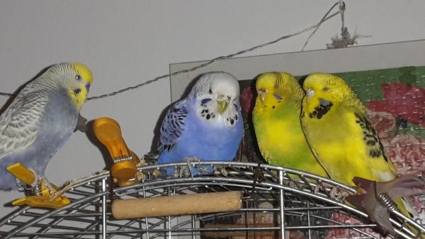 Maxi und seine drei Mädchen