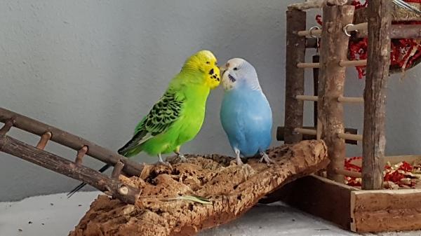 Fred und Miri - mein neues Liebespaar