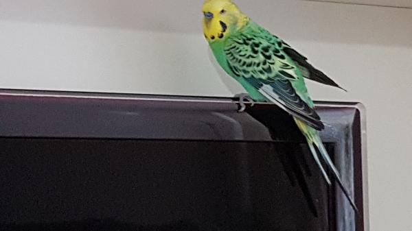 Merlin schaut, was es heute im TV gibt