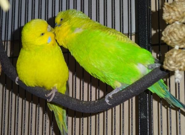 Mein grün-gelbes Pärchen