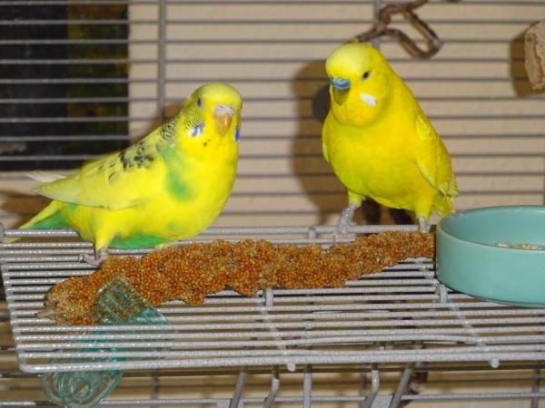 Mein grell gelbes Pärchen