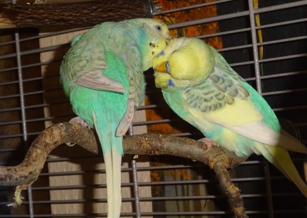 Ollie und Sky, ein farblich passendes Paar