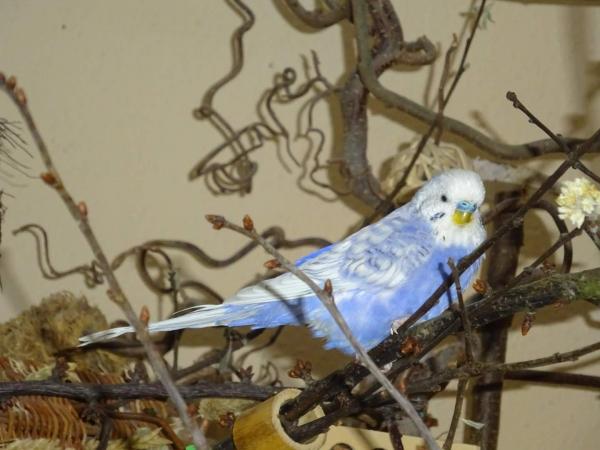 Cloud hat den Vogelbaum erobert