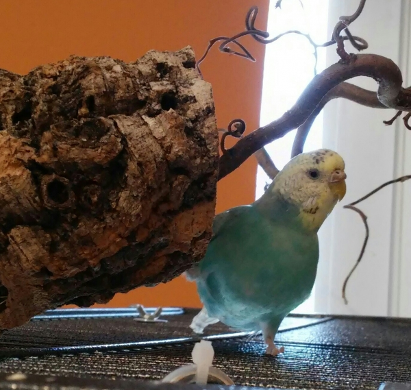 Ollie und ihre Korkröhre