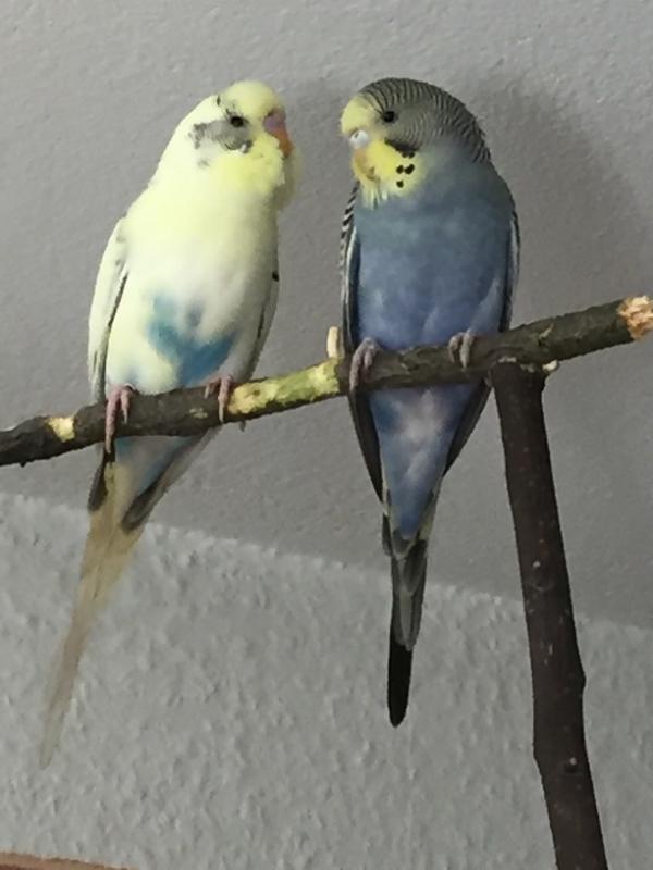 Maxi und Adi