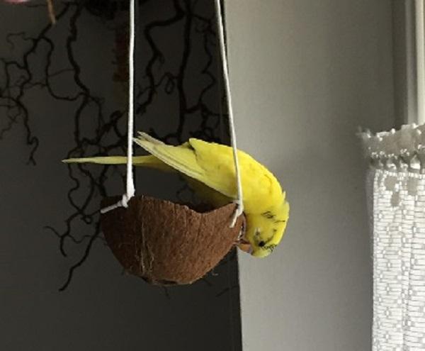 Sunny und die Kokosnussschaukel