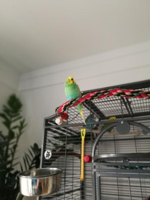 Meine Zelda