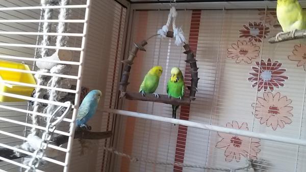 Billy und Birdy auf der Schaukel