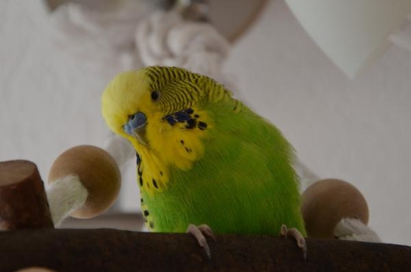 Coco auf neuer Schaukel