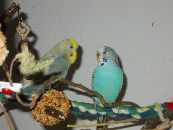 Kucki und Tweety