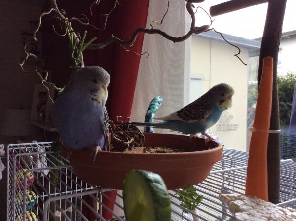Stui & Cookie