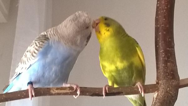 Bobo und Pauli