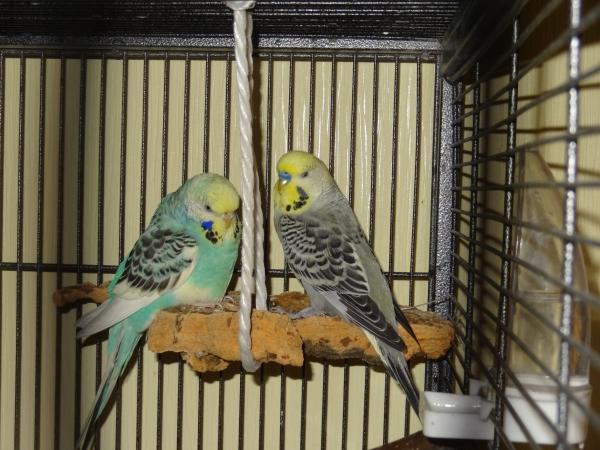 Cookie und Joschi