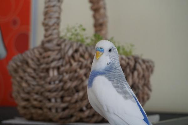 Timmy und die Vogelmiere