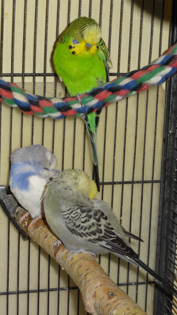 Drei müde Flauschis