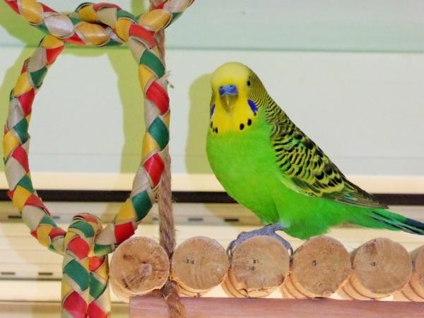 Livius, der grüne Purzel